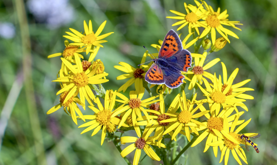 Gebet des Schmetterlings